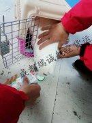 成都至杭州的宠物托运