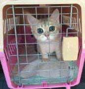 宠物空运流程